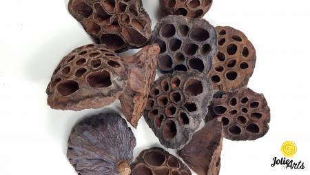 Lotus natural conservat, 4 - 6 cm [1]