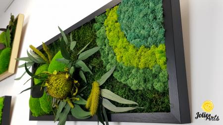 Tablou licheni naturali stabilizati, muschi bombati si plante naturale stabilizate, Jolie Arts, Model Banskia, dimensiune 30 x 70 cm, rama neagra, www.tablouriculicheni.ro-2 [5]