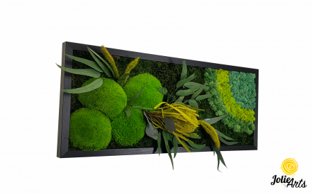 Tablou licheni naturali stabilizati, muschi bombati si plante naturale stabilizate, Jolie Arts, Model Banskia, dimensiune 30 x 70 cm, rama neagra, www.tablouriculicheni.ro-2 [0]