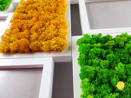 Rama fotografii decorata cu licheni naturali stabilizati, Jolie Arts [1]