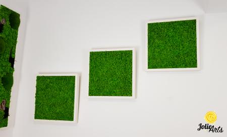 Set 3 tablouri cu licheni naturali stabilizati Jolie Arts, dimensiune 40 x 40 cm [3]
