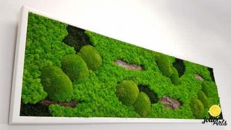 Tablou cu licheni, muschi si elemente naturale stabilizate, Model Scoarta [4]