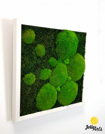 Tablou muschi plati, muschi bombati si licheni naturali stabilizati Jolie Arts. [1]