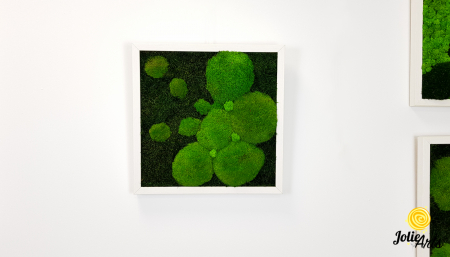 Tablou muschi plati, muschi bombati si licheni naturali stabilizati Jolie Arts. [4]