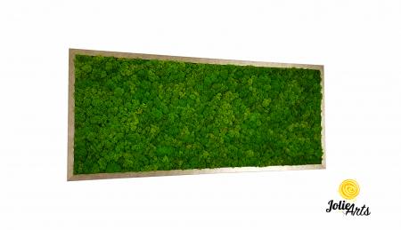 Tablou licheni, culoare Light Green [0]