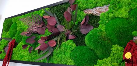 Tablou licheni, muschi si plante naturale stabilizate, Jolie Arts, Model Amaranthus Rosu [6]