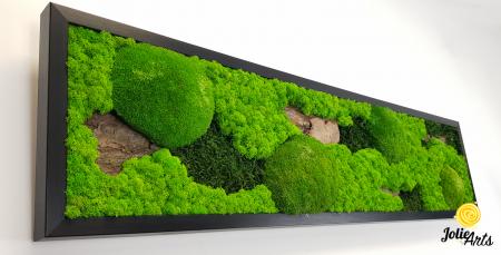 Model Scoarta: muschi de padure, scoarta pin si licheni stabilizati. [4]