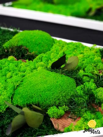 Tablouri cu licheni, muschi bombati, plante naturale stabilizate, set triunghiuri [1]
