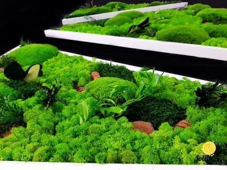 Tablouri cu licheni, muschi bombati, plante naturale stabilizate, set triunghiuri [3]