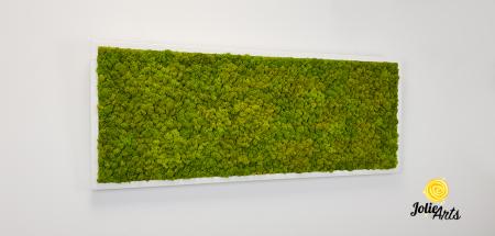 Verde Spring [3]