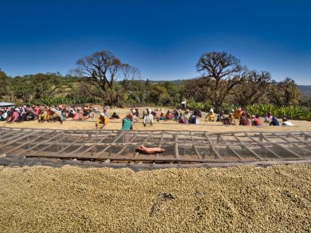 Etiopia Anasora Degfa Natural Dropshot [4]