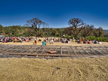Etiopia Anasora Degfa Natural Dropshot 1kg [4]