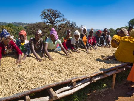 Etiopia Anasora Degfa Natural Dropshot 1kg [3]