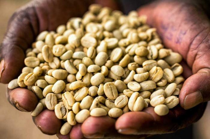 Cafea verde Etiopia Bale Mountain 0