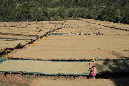 Ethiopia Bizuneh Woman Project [4]