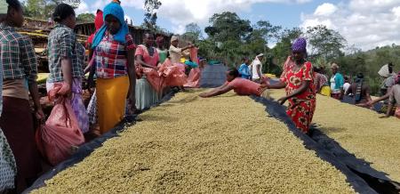 Cafea verde Etiopia Adola0