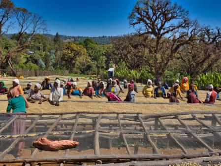 Etiopia Anasora Degfa Natural Dropshot 1kg [5]