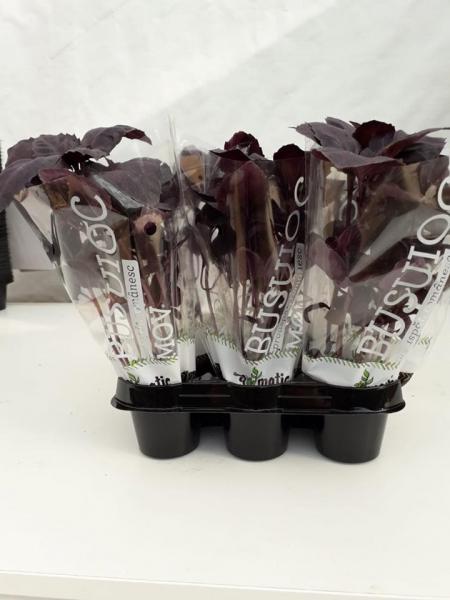 Mix ghivece cu plante proaspete Exotic 1