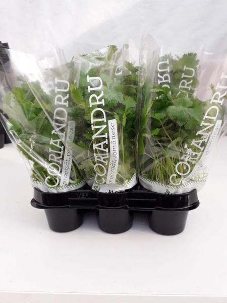 Mix ghivece cu plante proaspete Exotic 3