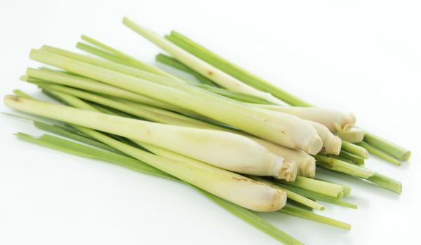 Lemongrass 100 gr 0