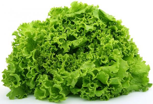 Salata Lollo Bionda 0