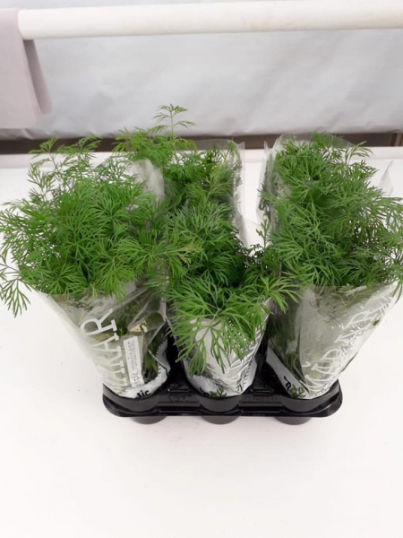 Mix ghivece cu plante aromate traditional 2