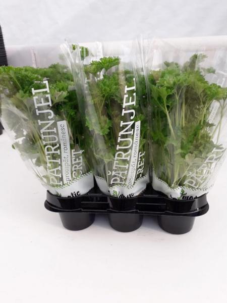 Mix ghivece cu plante proaspete Exotic 0