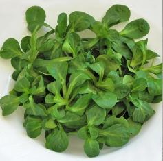 Salata valeriana-100 GR 0
