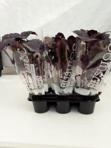 Mix ghivece cu plante proaspete Exotic1