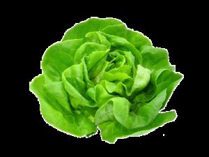 Salata verde - bucata1