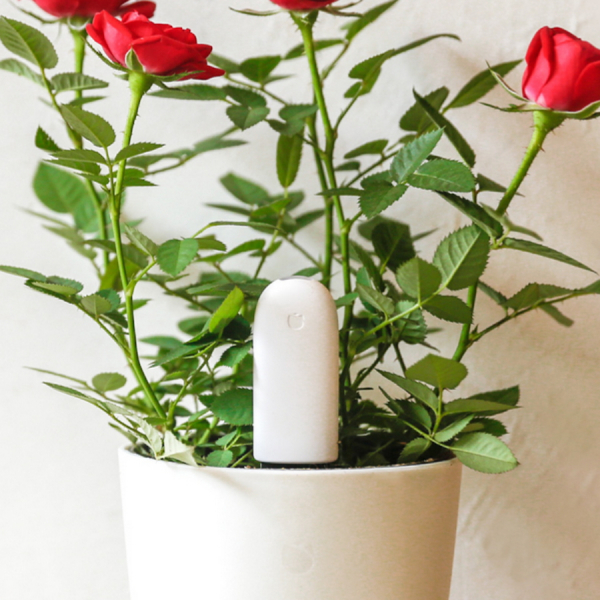 Senzor Xiaomi Mijia pentru cresterea plantelor cu bluetooth, engleza, varianta internationala