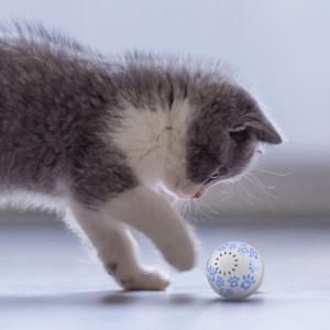 Minge robotica smart Petoneer, jucarie pentru pisici, 5 ore autonomie, incarcare USB, compartiment intern iarba pisicii2