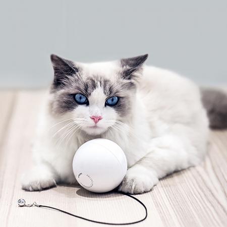 Minge smart pentru pisicute Homerunpet TB10, 2 functii, pana la 25 zile autonomie1
