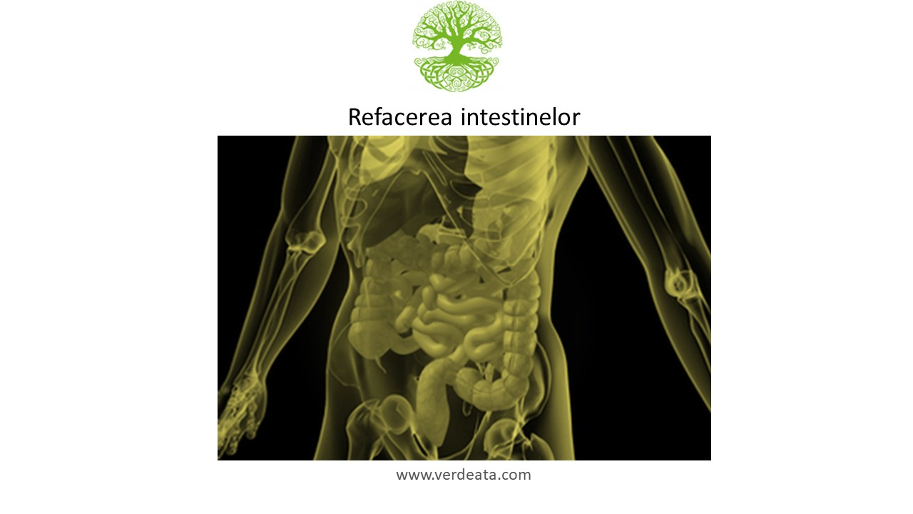 Refacerea intestinelor