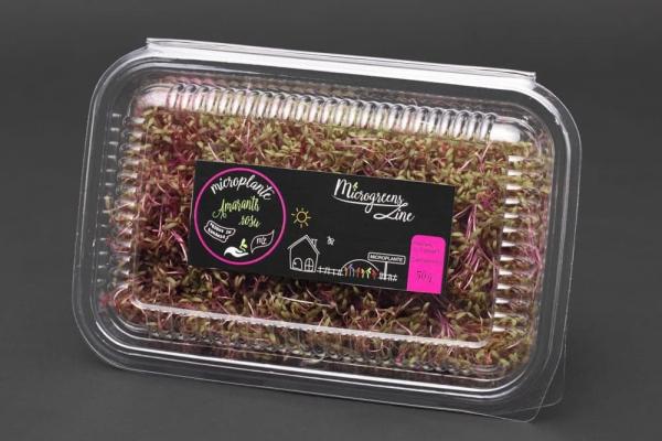 Amaranth Rosu - Microplante 0