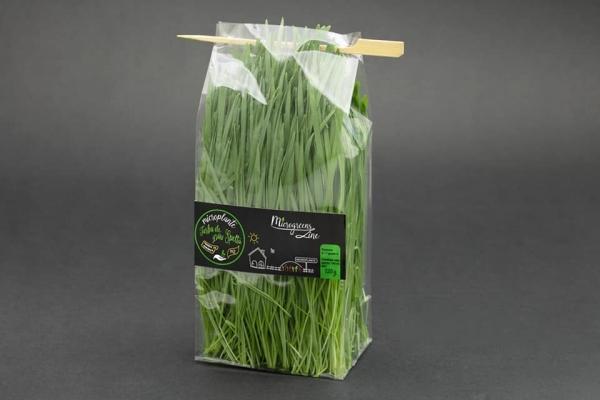 Iarba de grau spelta - microplante 0