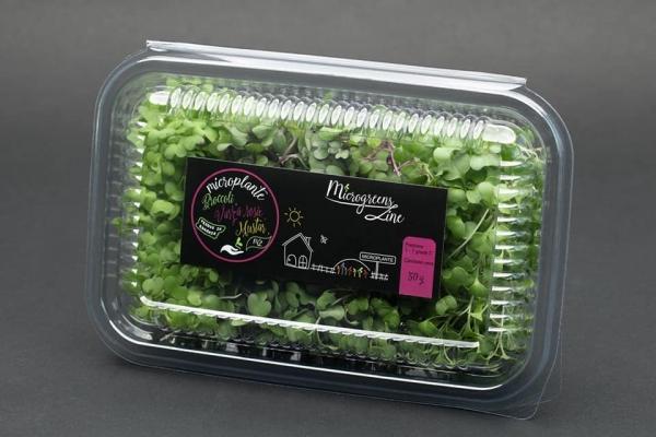 Editie speciala - Broccoli, varza rosie, mustar - microplante 0