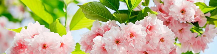 Fototapete florale,imagini cu flori
