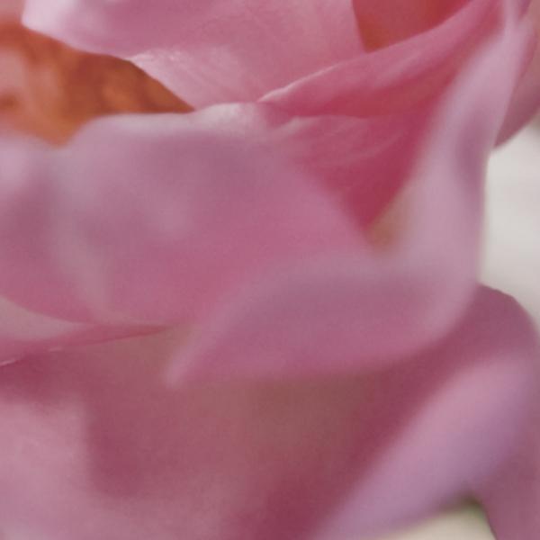 Fototapet 4-713 Bouquet [1]