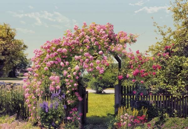 Fototapet 8-936 Gradina cu trandafiri 0