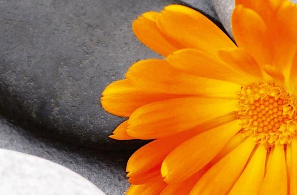 Fototapet 00678 O inima intre pietre [1]
