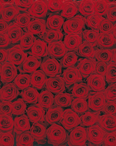 Fototapet 4-077 Trandafiri [0]
