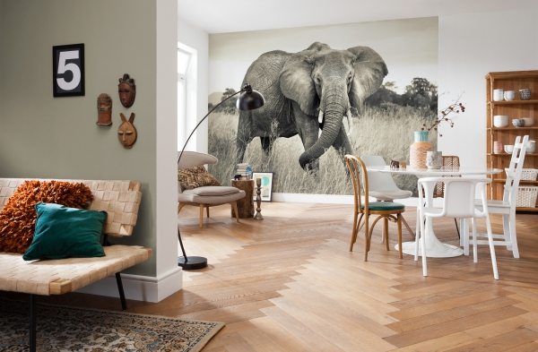 Fototapet XXL4-529 Elefant [1]