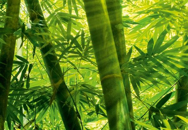 Fototapet 00123 Padurea de bambus [1]