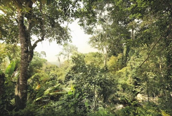 Fototapet XXL4-024 Padure tropicala [0]