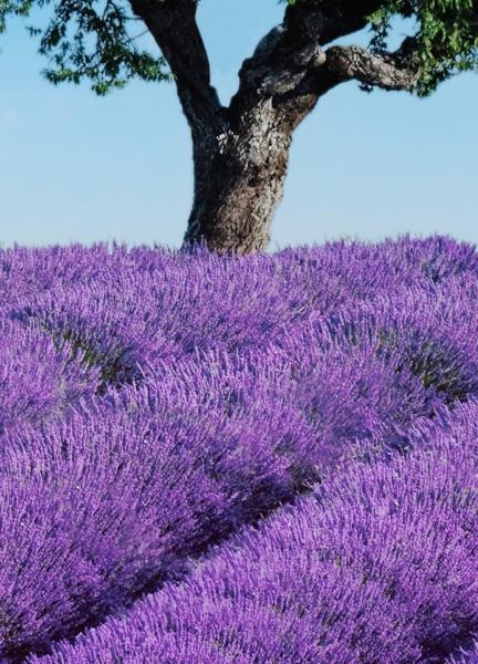 Fototapet 00309 Provence [1]