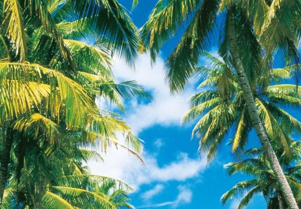 Fototapet 00273 Insula tropicala [1]
