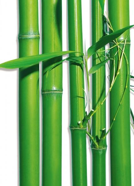 Fototapet 00421 Bambus [1]