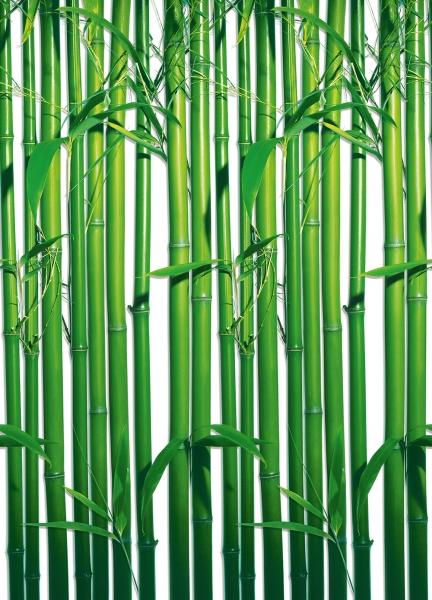 Fototapet 00421 Bambus [0]