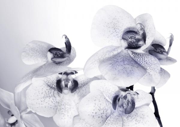 Fototapet FTS 1306 Orhidee [0]